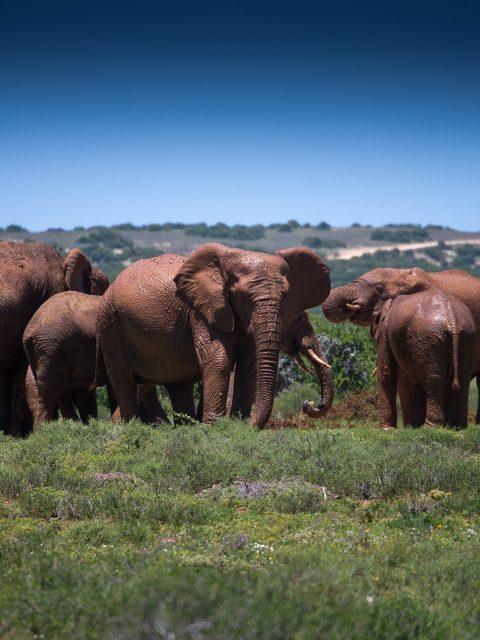 elephantengeburt